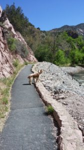 Dog at Catwalks Recreational Area..